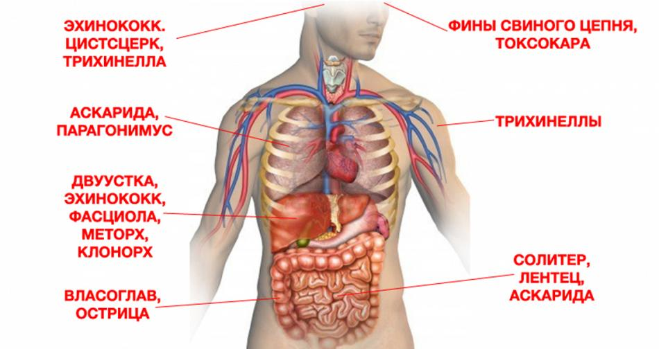 human abdomen and correct answers